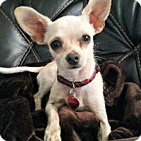 Adopt A Pet :: Fievel - McKinney, TX
