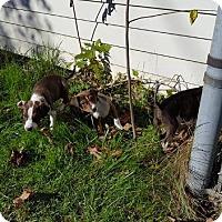 Adopt A Pet :: Benson - Racine, WI