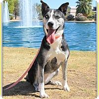 Adopt A Pet :: Briely - Glendale, AZ