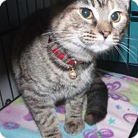 Adopt A Pet :: milky way - Muskegon, MI