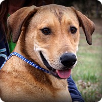 Adopt A Pet :: Gandalph - Glastonbury, CT