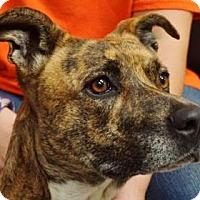 Adopt A Pet :: Sadie - LaHarpe, KS
