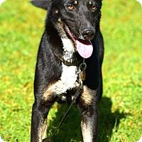 Adopt A Pet :: Sammy - Penngrove, CA