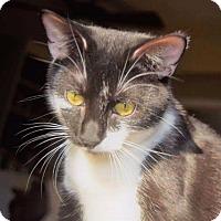 Adopt A Pet :: Trixie - Fenton, MO