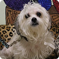 Adopt A Pet :: Louie - Elyria, OH