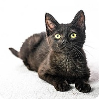 Adopt A Pet :: Jamie - Oxford, MS