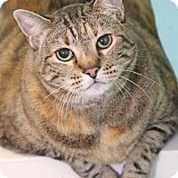 Adopt A Pet :: Brownie - Encinitas, CA