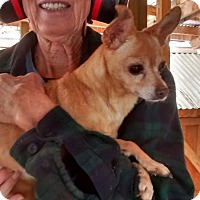Adopt A Pet :: Trixie - Fort Collins, CO