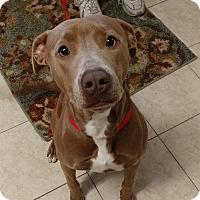 Adopt A Pet :: Maisey - Umatilla, FL