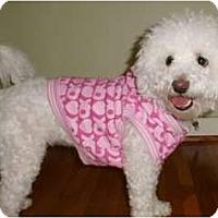 Adopt A Pet :: Prissy - Mooy, AL