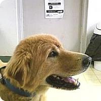 Adopt A Pet :: Wolfe - Jacksonville, FL