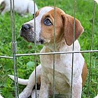Adopt A Pet :: Maylee - Albert Lea, MN
