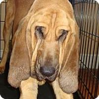 Adopt A Pet :: Maude - Georgetown, KY