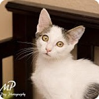 Adopt A Pet :: Van Gogh - Fountain Hills, AZ