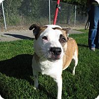 Adopt A Pet :: Cuddles - Lake Odessa, MI