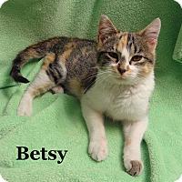 Adopt A Pet :: Betsy - Bentonville, AR