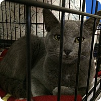 Adopt A Pet :: Nicholas - Byron Center, MI