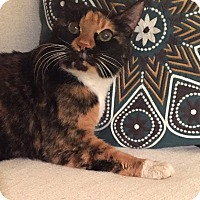 Adopt A Pet :: Eileen - Addison, IL