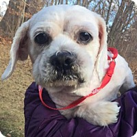 Adopt A Pet :: Bubblicious - Bloomfield, CT