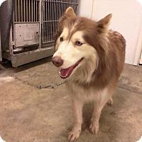Adopt A Pet :: PEG - Upper Sandusky, OH