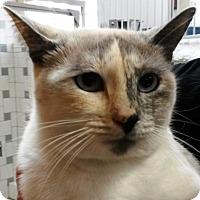 Adopt A Pet :: KIDA - DeLand, FL