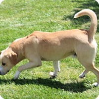 Adopt A Pet :: TRENT - Harmony, Glocester, RI
