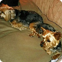 Adopt A Pet :: Spike and Sasha - Chesterfield, MO