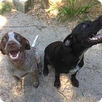 Adopt A Pet :: Bella - Groveland, FL
