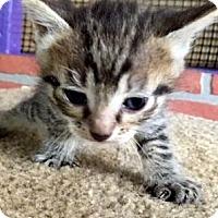 Adopt A Pet :: Neil - Porter, TX