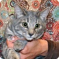 Adopt A Pet :: Augistine - Wildomar, CA