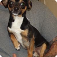 Adopt A Pet :: Boots - Cheboygan, MI