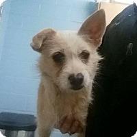 Terrier (Unknown Type, Medium) Mix Dog for adoption in Summerville, South Carolina - Queenie