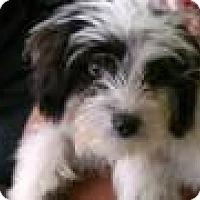 Adopt A Pet :: Zoey - Culver City, CA