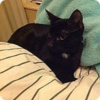 Adopt A Pet :: Ying - Brooklyn, NY