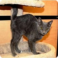 Adopt A Pet :: Sebastian - Nolensville, TN