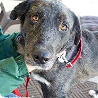 Adopt A Pet :: Jack - Homewood, AL
