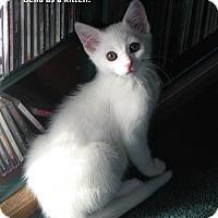 Adopt A Pet :: Bella aka Fiona - Davis, CA