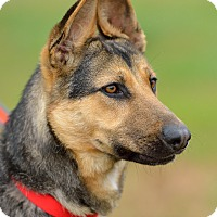 Adopt A Pet :: Max - Dacula, GA