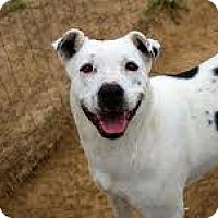American Bulldog Mix Dog for adoption in McKenzie, Tennessee - Baby