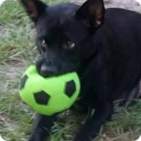 Adopt A Pet :: Journey - Bradenton, FL