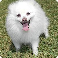 Adopt A Pet :: Rudy - Umatilla, FL