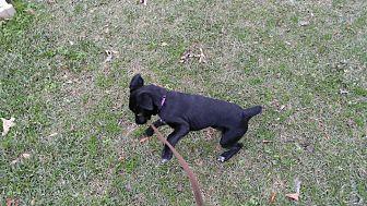 Labrador Retriever Mix Dog for adoption in Goldsboro, North Carolina - Lady
