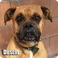 Adopt A Pet :: Dustin - Encino, CA