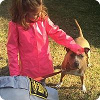 Adopt A Pet :: Moriah - Bloomfield, CT