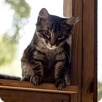 Adopt A Pet :: Connie - Daleville, AL