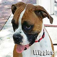 Adopt A Pet :: Wiggles - Encino, CA