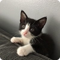 Adopt A Pet :: Faith - available 8/30 - Sparta, NJ