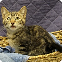 Adopt A Pet :: Caleb - Redwood Falls, MN