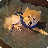 Adopt A Pet :: Matty - LAKEWOOD, CA