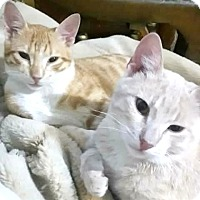 Adopt A Pet :: Lucky & Leo (Egyptian Brothers) - York, PA